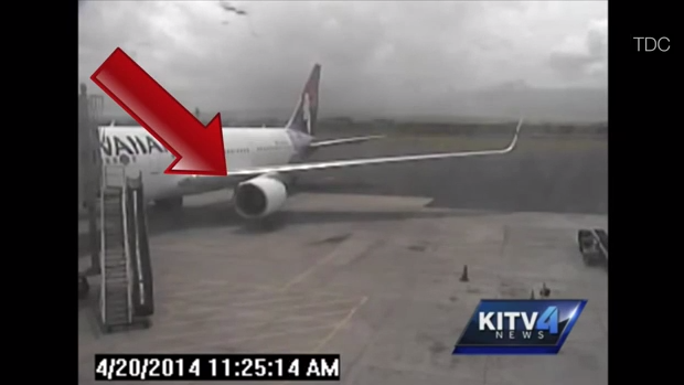 Airline Stowaway Video